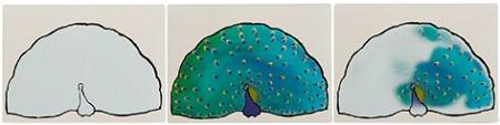 Aqua-Paint-Natural-World-by-Active-Minds