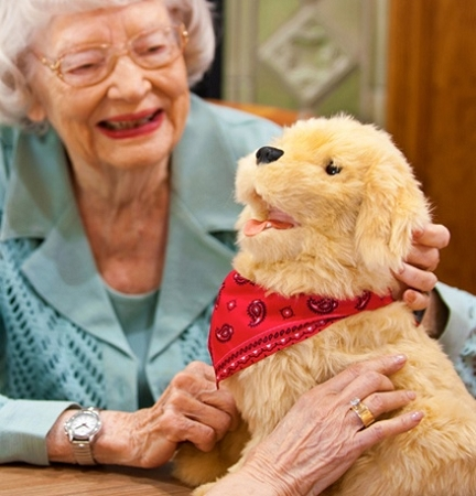 pets for the elderly Do you know that dogs for seniors and elderly people are great companions with a lot of great benefits everyday dogs bring love, laughter and companionship to.